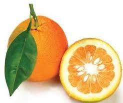 نارنج هر نیم کیلو